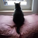 Dogbed - unsere Katze ist auf den Hund gekommen...